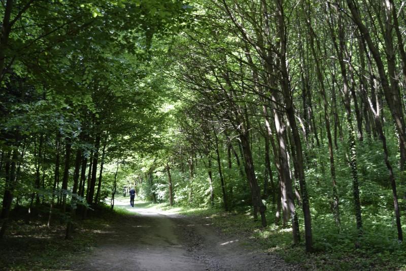 Alsóerdő