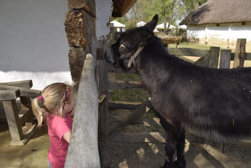 Gyermekbarát programok Zalaegerszegen