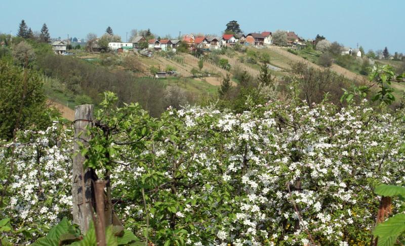 Virágeső és színkavalkád Zalaegerszegen